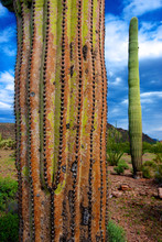 Organ Pipe Cactus National Mon...