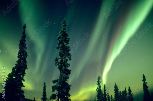 Tela  USA, Fairbanks area, Central Alaska, Aurora Borealis, Northern Lights, major solar flare event, October, 28, 29 of 2003