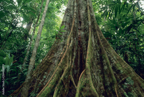 Fényképezés Buttressed tree in rainforest, Corcovado National Park, Costa Rica