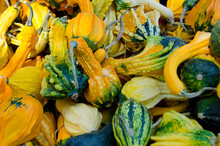 California Fruit Stand Autumn Harvest. Ornamental 'Winged' Gourds.