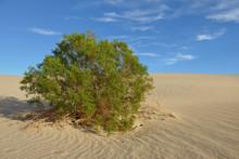 USA, California, Death Valley,...