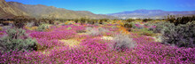 USA, California, Anza-Borrego ...