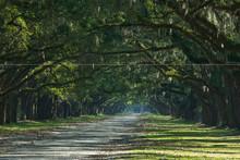 USA, Georgia, Savannah. Spanish Moss Hangs From Oak Trees Overhanging A Road.