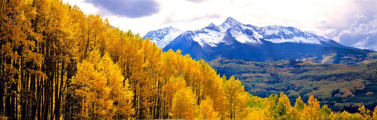 Fototapeta Las USA, Colorado, Telluride. Aspen forests cover the foothills of the San Juan Mountains near Telluride, Colorado