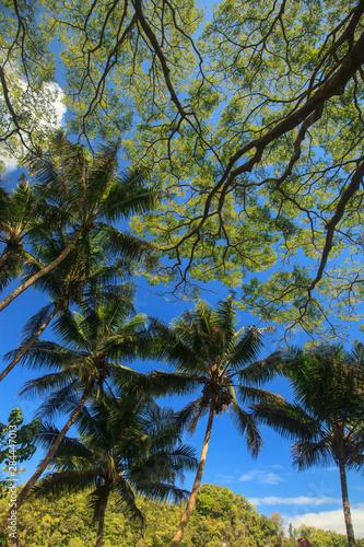 Hawaiian Tropical Botanical Gardens, near Hilo, Big Island, Hawaii, USA.