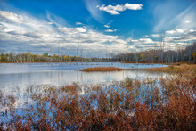 USA, Indiana, The Celery Bog Wetlands In Autumn