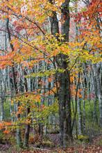 USA, Maine, Acadia National Park, Autumn Foliage