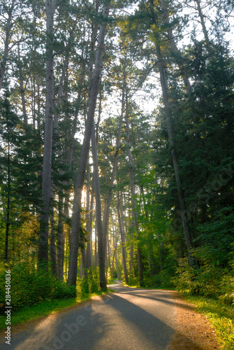 Photo Old growth forest, Itasca State Park, Minnesota, USA
