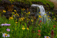 Waterfall Behind Wildflowers. ...