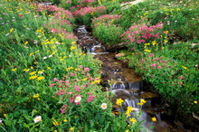 North America, USA, Montana, Glacier National Park. Wild Flowers And Creek