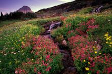 North America, USA, Montana, Glacier National Park. Monkey Flowers And Waterfall