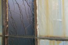 Artistic Shot Of Vines At An Abandoned Building, Ellis Island, New York. USA.