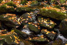 Tiny Creek Winds Through Boulders Strewn With Autumn Leaves In Great Smoky Mountains National Park, Tennessee