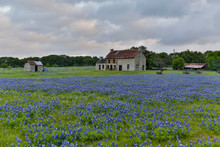Old Abandoned Homestead With Field Of Blue Bonnets, Marble Falls, Texas.