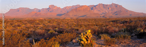 Obraz USA, Texas, Big Bend NP. Sunrise brings a rosy hue to the shapes and textures of the Chisos Mountains, in Big Bend National Park, Texas. - fototapety do salonu