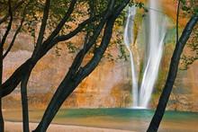 USA; Utah. View Of Calf Creek Falls Through Trees.