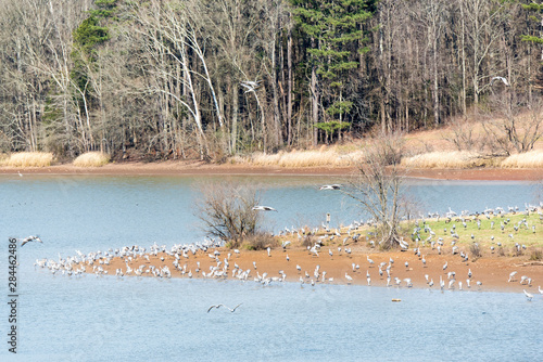 Usa, Tennessee, Birchwood, Hiwassee Wildlife Refuge migratory stop for Sandhill Canvas Print