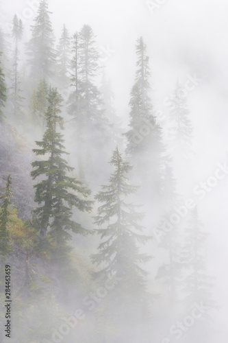 Fototapety, obrazy: USA, Washington, Mount Baker Wilderness, Cascade Mountains. Dense fog blankets mountainside forest.