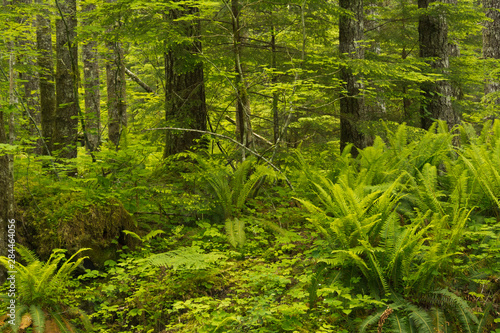 Forest Interior, Gifford-Pinchot National Forest, Cougar, Washington, USA.