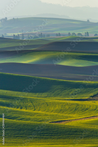 Canvas Prints Honey USA, Washington State, Palouse, Spring Rolling Hills of Wheat and Fallow fields