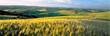 Leinwandbild Motiv USA, Washington State, Colfax. Barley fields cover much of the rolling hills of the Palouse region of eastern Washington State.