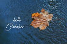 Hello October. Fall Abstract Backdrop. Yellow Maple Leaf In Water, Autumn Season. Rain And Puddle With Maple Leaf. Rainy Day Weather. Shallow Depth