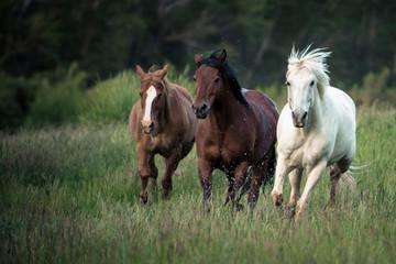 Three horses running through a green grassy field