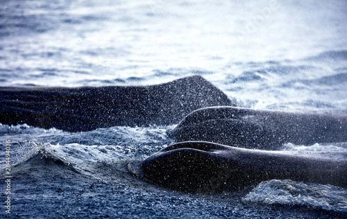 фотография  Whale watching