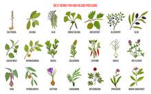 Best Herbs That Lower High Blood Pressure