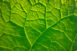 canvas print picture - green leaf detail