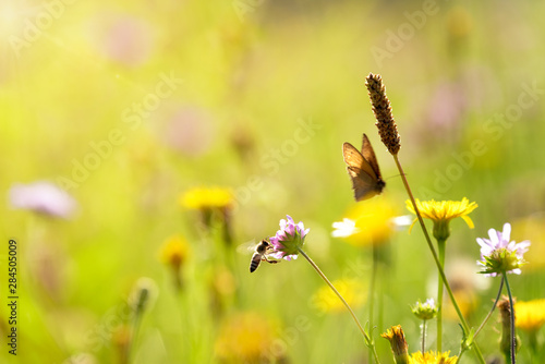 A meadow with flowers and a butterfly sunlit