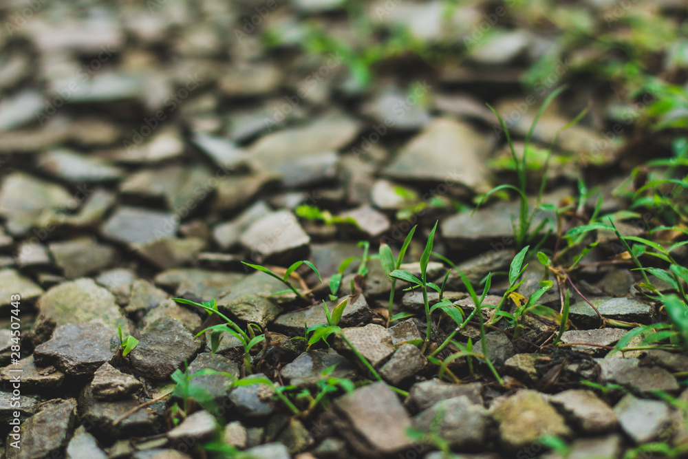 Fototapety, obrazy: green plant growing in soil under the rock surface