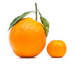 canvas print picture - Big and Small Orange Isolated