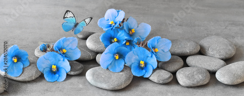 Foto auf AluDibond Blumen Zen stones and violet flowers on grey background.