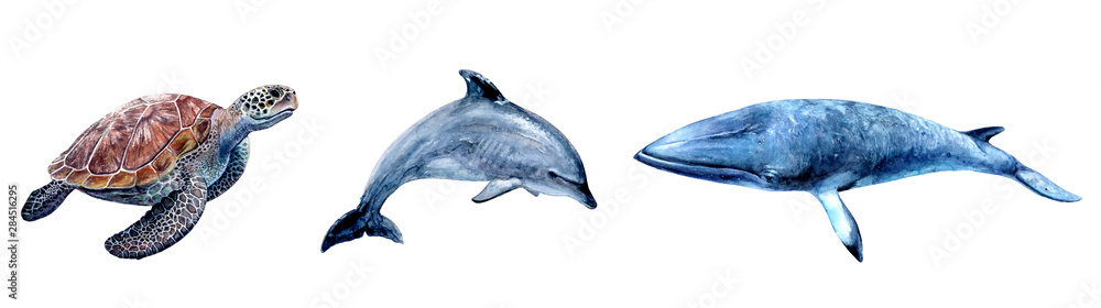 Fototapety, obrazy: Watercolor hand drawn sea turtle, dolphin, minke whale realistic illustration isolated on white.