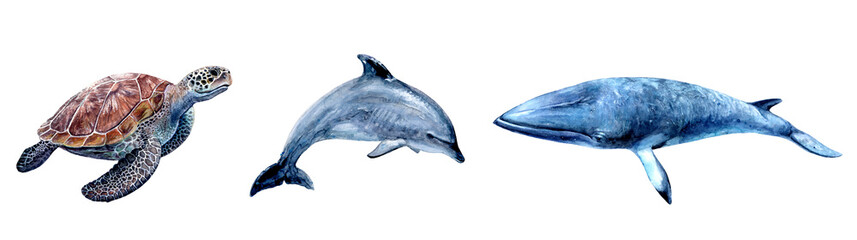 Watercolor hand drawn sea turtle, dolphin, minke whale realistic illustration isolated on white.