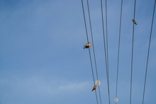 Birds Perching On Electrical W...