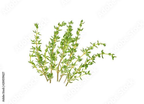 Fototapeta  fresh thyme isolated on white background
