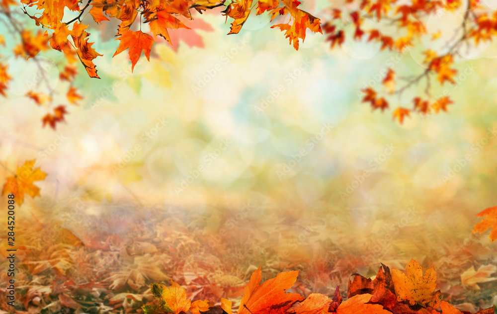 Fototapety, obrazy: Wooden table with orange leaves autumn background