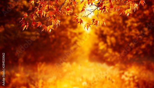 Campagne maple leaves on autumn background