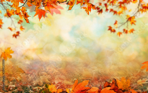 Fototapeta Wooden table with orange leaves autumn background obraz