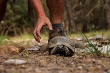 Tortoise Walks In A Forest Nea...