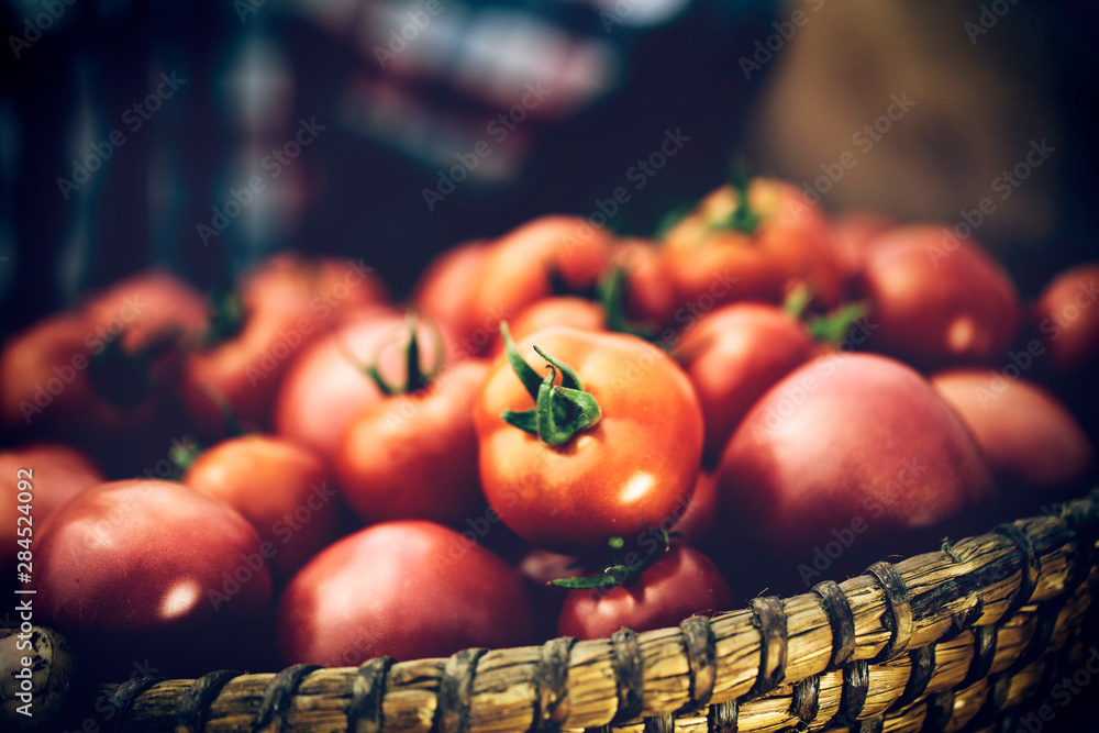 Fototapety, obrazy: Fresh red tomatoes in farmer hands and free space for your decoration.