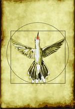 Hummingbird Vector Drawing In Leonardo Da Vicni Style On Old Retro Paper Pattern