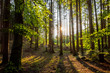 Sunlight in a Mixed forest, Bavaria, Germany