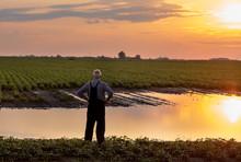 Farmer Standing Beside Pond In...