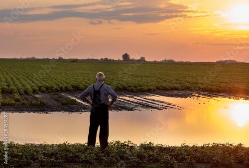 Fotografia  Farmer standing beside pond in agricultural field