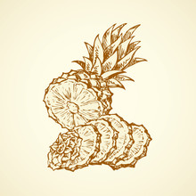 Pineapple. Vector Drawing