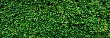 Panorama Green Leaves Wall Tex...