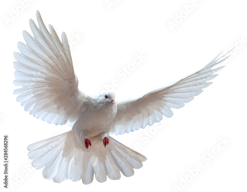 free flying white dove isolated on a white background Fototapete
